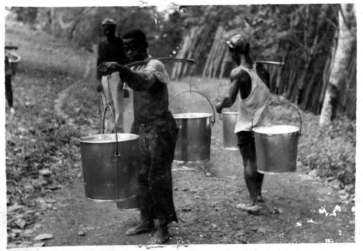 Tappers Carrying Buckets of Latex